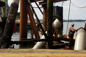 Prince Rupert Replace Trestle & Two Dolphins